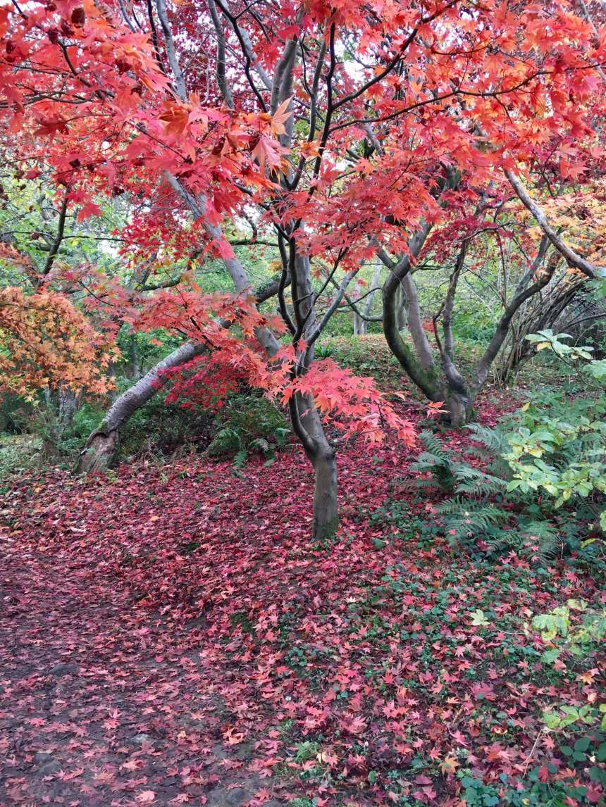 Winkworth_Arboretum_by_Law