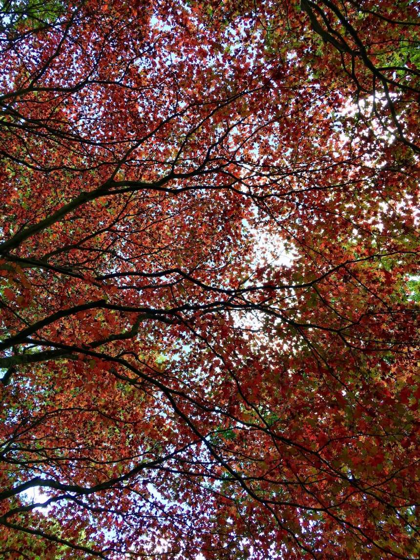 Autumn_Winkworth_Arboretum_by_Law