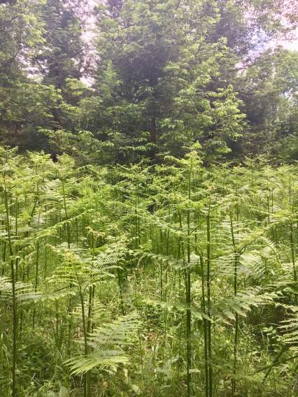 ferns_by_Law
